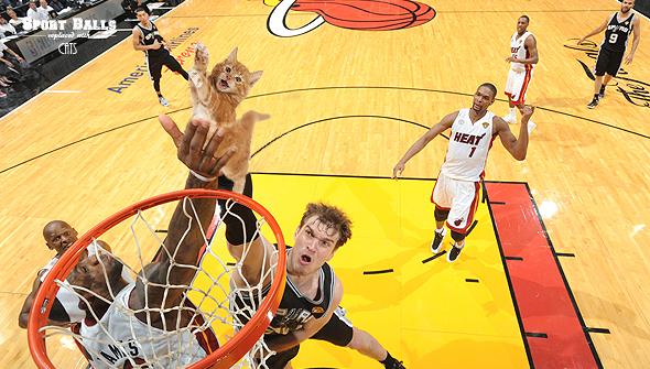cat dunk