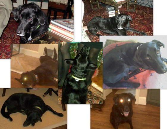 missy collage