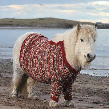fairisle friend