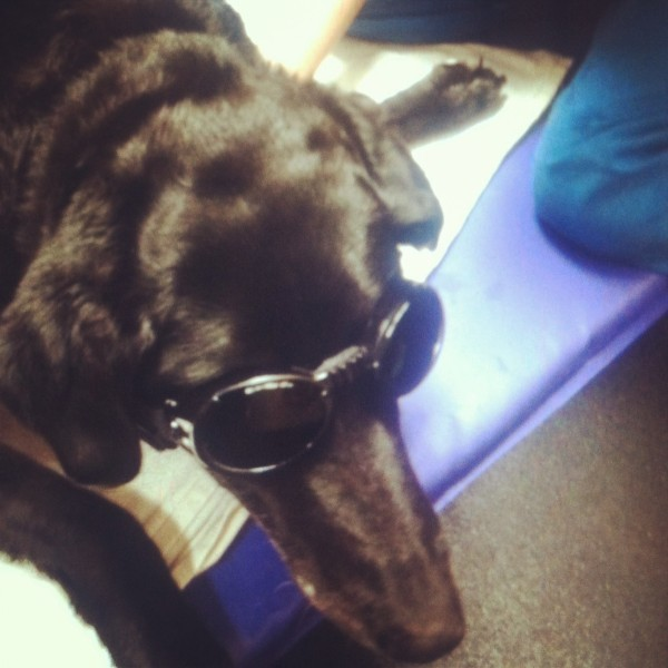 when she was older, Missy underwent various treatments for her joints; this was her day at laser therapy